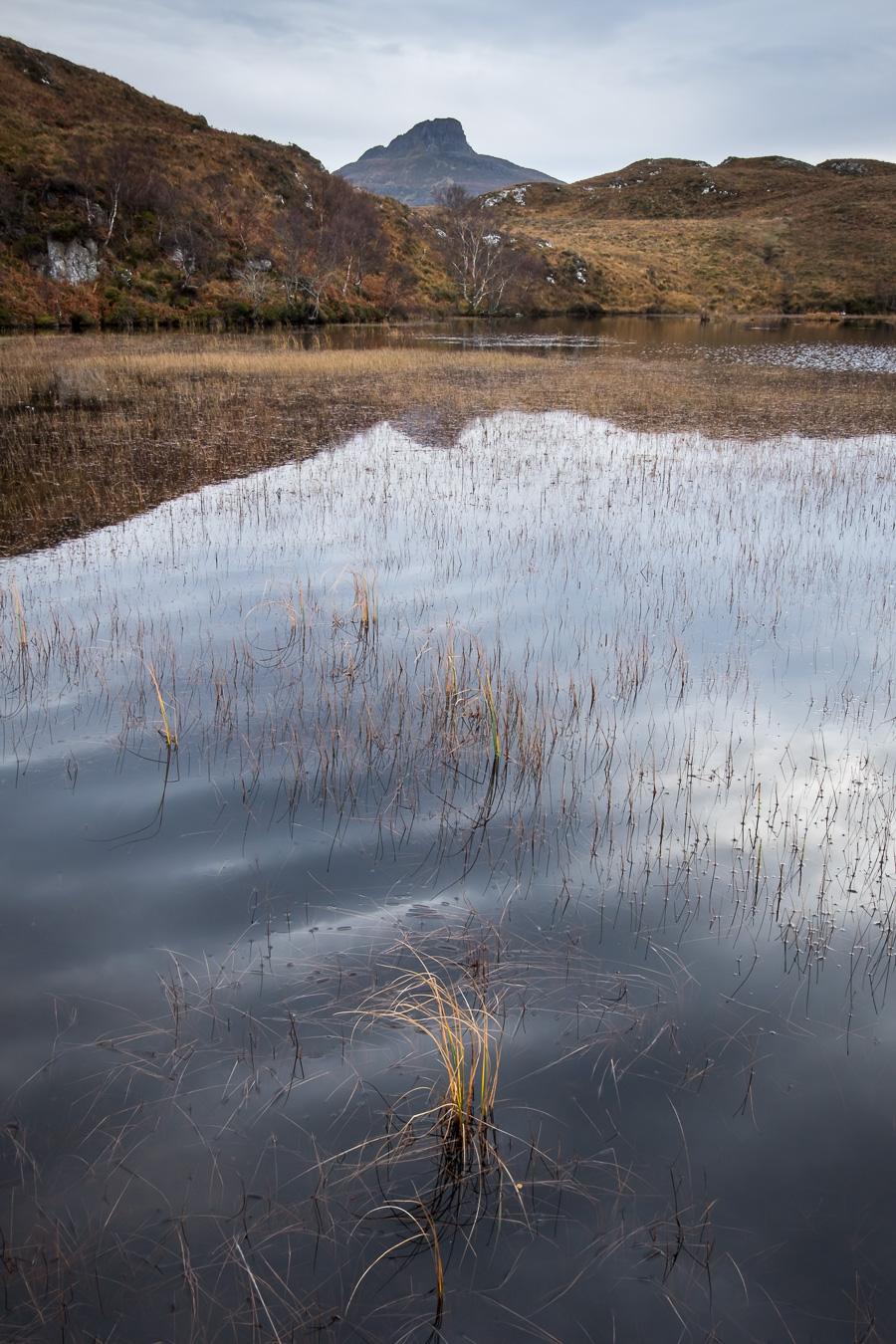 Lochan Grass